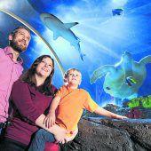 """<p class=""""infozeile"""">               Im Sea life in konstanz abtauchen und dort mee(h)r erleben             </p><p class=""""infozeile"""">Eine abenteuerliche Expedition in die Tiefen des Meeres verspricht ein Ausflug ins Sea Life in Konstanz. Rund 3000 Süß- und Salzwasserfische in mehr als 30 naturgetreu gestalteten Becken warten auf große und kleine Besucher. Durch den gläsernen Tunnel erlebt man die imposanten Grünen Meeresschildkröten sowie die majestätischen Haie hautnah. Zu den absoluten Besucherlieblingen gehören die zehn drolligen Eselspinguine.</p>"""