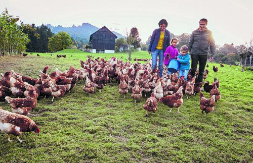 Ein Motto auf dem Martinshof: Hühner raus ins Freie, Interessierte rein in den Betrieb.