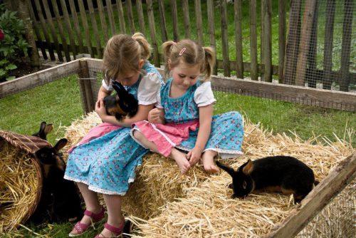 Die große Ausstellung am Wochenende vom Kleintierzuchtverein Hard wird wieder viele Tierfreunde – und vor allem Kinder – anlocken.