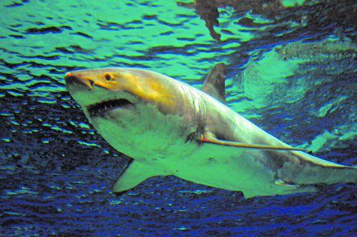 Vor allem Überfischung, illegale Fischerei und Plastikverschmutzung haben die Populationen drastisch dezimiert. APA