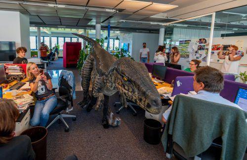 Antonia Sohm ließ sich nicht von ihrem Traum vom eigenen Dinosaurier, den sie auf den Namen Ruby getauft hat, abbringen. Überall, wo der Velociraptor auftaucht, sorgt er für Aufsehen. Auch die VN-Redaktion staunte. VN/Stiplovsek