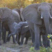 Artenschutz wird ausgeweitet