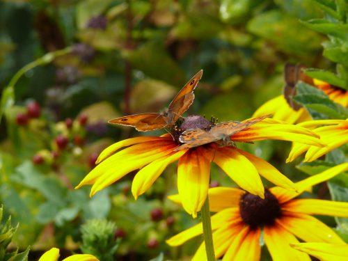 Auch Insekten sollten sich im heimischen Garten wohlfühlen.LWK