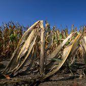 WWF warnt vor Wasserkrise