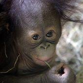 Süßer Nachwuchs im Affenhaus