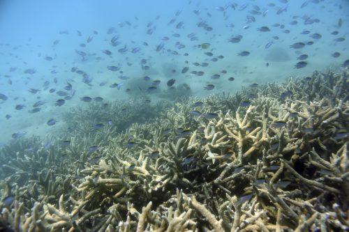 Das Korallenriff wurde 1981 zum Weltkulturerbe erklärt. ap