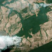 Weltweite Sorge um Regenwald