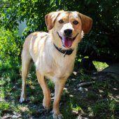 Zuhause für Hunde und Katzen aus Tiertransporten gesucht