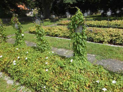 Die Natur holt sich auch auf dem Friedhof zurück, was einst ihres war. In Bregenz bringen Freiwillige das Kriegerdenkmal auf Vordermann. Brunner
