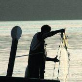 Sauberes Wasser, Kormoran und Stichling: Dem Bodensee gehen Felchen verloren. A5
