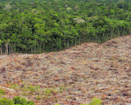 In Brasilien sind im Juli 2254 Quadratkilometer Regenwald gerodet worden.