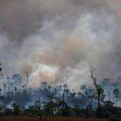 Bolsonaro will Brandrodung in der Trockenzeit verbieten