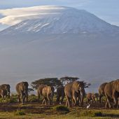 Elefantenschädel und Elfenbein