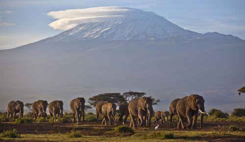 Mehrere Länder im südlichen Afrika beantragen, mehr Handel mit Elefanten zuzulassen.AP
