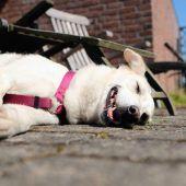 Forscher untersuchen Braune Hundezecke