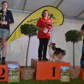 Spannende Wettkämpfe bei internationalem Hundeturnier