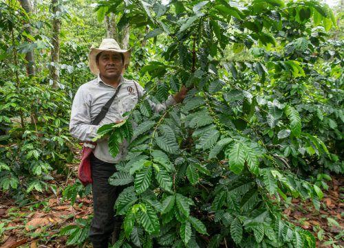 Am Mittwoch, 2. Oktober 2019, um 19 Uhr spricht der Bio-Kaffeebauer Pedro Díaz Montejo im Kolpinghaus Dornbirn. Veranstalter