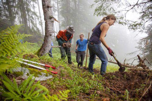 Beim Bergwaldprojekt engagieren sich Freiwillige ehrenamtlich für das Gemeinwohl. Gelebt wird während der Projektwoche mitten im Wald.