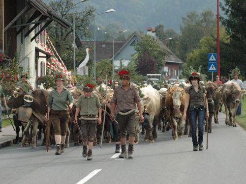 Das Alpvieh kehrt am Samstag von der Freschen-Alpe zurück. Auch in Fraxern findet nochmals ein Alpabtrieb statt.welte