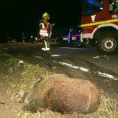Pkw rammt auf der A 14  zwei Wildschweine