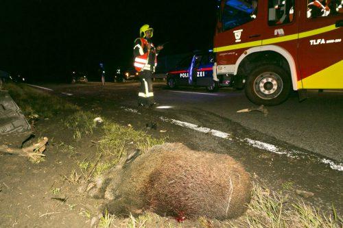 Die beidenTiere wurden vom Auto der Feldkircherin erfasst, getötet und von der Fahrbahn geschleudert.D. MATHIS