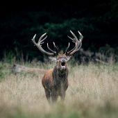 Hauptsaison für Jäger startet