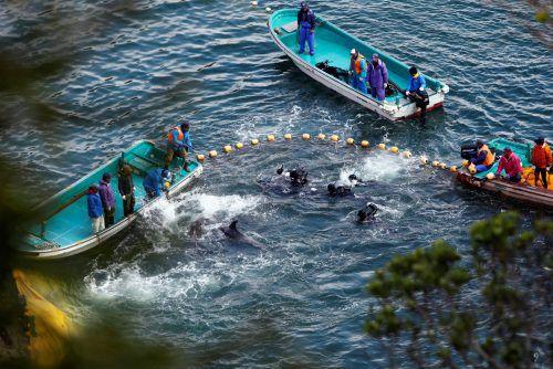 """Die Delfinjagd sei für die Menschen in Taiji """"unverzichtbar"""". Reuters"""