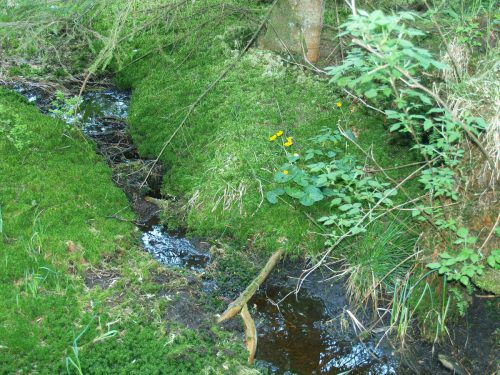 Die einstmals angelegten Drainagegräben werden geschlossen, damit das Moor sich erholen kann.Stadt