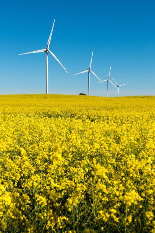 """Die EU-Kommission will nun """"grüne"""" Investments weiter stärken und damit den Klimawandel bekämpfen. VN/Stiplovsek"""