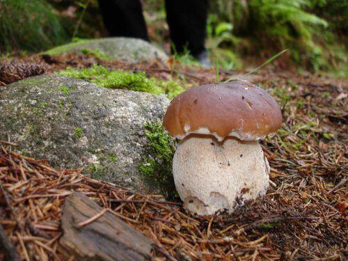 Die inatura veranstaltet am Samstag eine Pilz-Exkursion für Anfänger. inatura