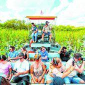 Auf Alligatorensuche mit Luftkissenboot