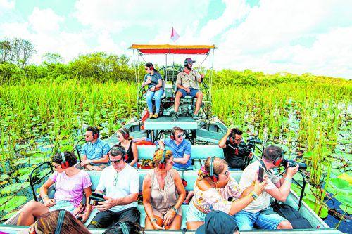 Die scheuen Alligatoren im dichten Gras zu finden, ist gar nicht so einfach.