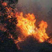 Buschfeuer in Australien sind außer Kontrolle