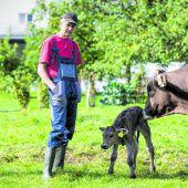 Rinder-TBC bringt 53 Tieren den Tod