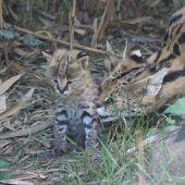 Neugierige Kätzchen