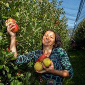 Äpfel sind heuer von höchster Güte. A6