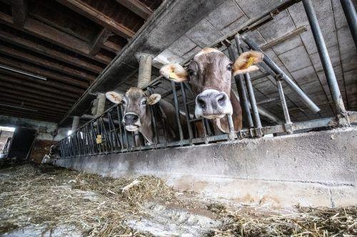 Das Tierwohl und die Veränderungen der Landwirtschaft sind für die Vorarlberger Bauern genauso wie für die Konsumenten ein wichtiges Thema.VN/Sams