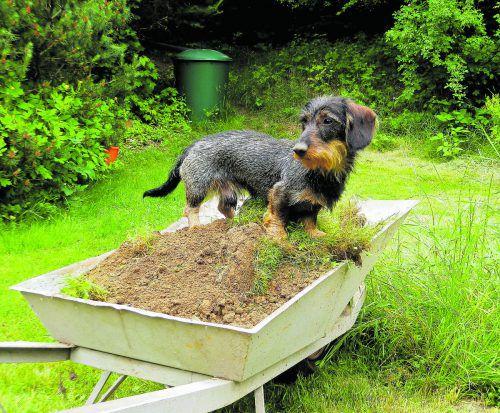 Gartenarbeit Auch wenn das Haustier mithilft: Bäume, die stark in die Höhe wachsen, und ausladende Sträucher sollten nicht zu nahe an der Grenze stehen.foto: M. Großmann_pixelio.de