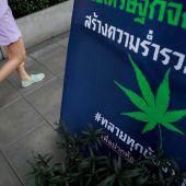 Lustenauer Unternehmer baut in Thailand Cannabis an
