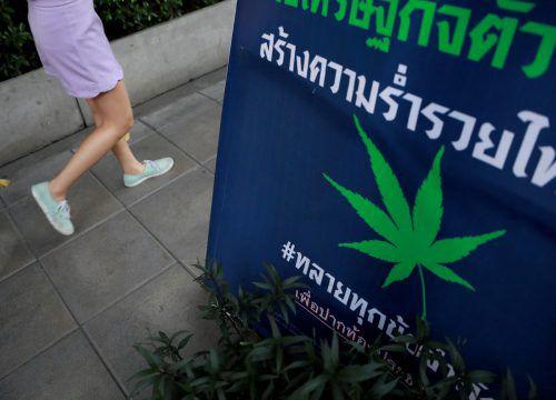 In Thailand darf Cannabis für Medizin und Forschung genutzt werden. Reuters