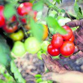 Landgenossen für ein Bio-Ländle