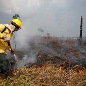 Zahl der Brände in Brasilien nimmt weiter zu