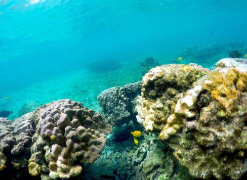 Viele Korallen an der Küste erholen sich erst noch von der Katastrophe im Jahr 2015 und sind daher noch einmal anfälliger für den Hitzestress. AP