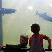 Hitze gefährdet Meeresbewohner