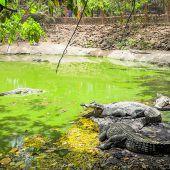 Heiliger Krokodilteich