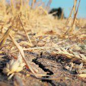 Klimawandel bedroht Weizenversorgung