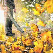 Herbstlaub entfernen und verwerten
