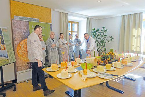 Am Buratag in Schruns werden unter anderem die Sura Kees durch eine Fachjury der Landwirtschkaftskammer Vorarlberg bewertet. LK Vorarlberg