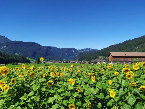 Auf der Wiese in Bezau wird auf bodenschonende Art Gemüse angebaut. Hier finden zahlreiche Tiere ein Zuhause. mam