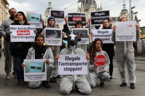 Der VGT demonstriert regelmäßig gegen Tiertransporte. VGT